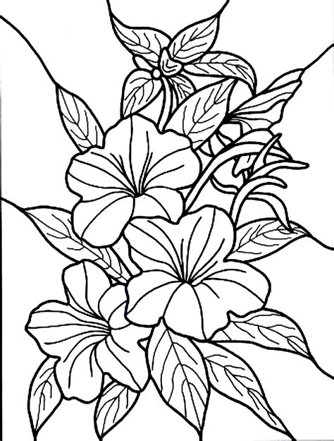 coloring page flower free printable hibiscus coloring pages for