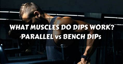 what does benching do what muscles do dips work parallel vs bench dips