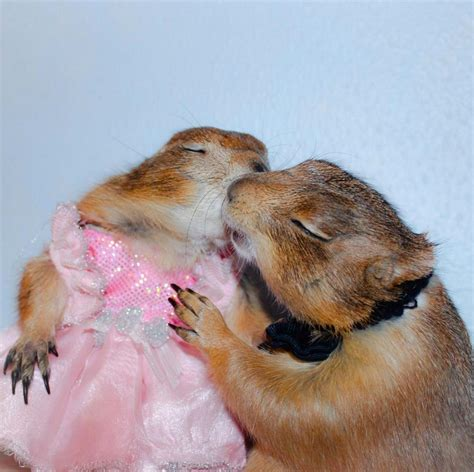 dogs on the meet and swarley the two most important prairie dogs on the pleated