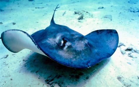 Und Bilder by Bilder Mittelmeer Fische