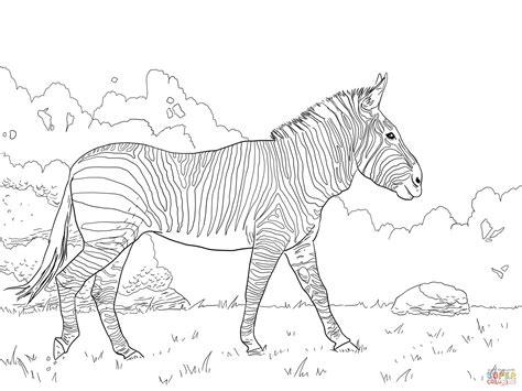 zebra outline coloring page ausmalbild hartmannzebra ausmalbilder kostenlos zum