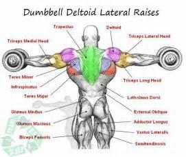 dumbbell deltoid lateral raises shoulder workout