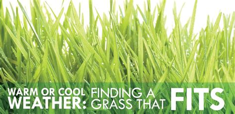 warm  cool weather finding  grass  fits