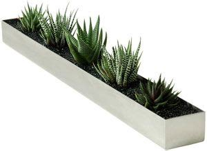 plants  narrow trough  windowsill  paint