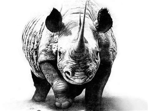 cool rhino tattoos rhino pencil drawing safari tattoos