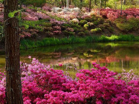 flower garden spring photo  fanpop