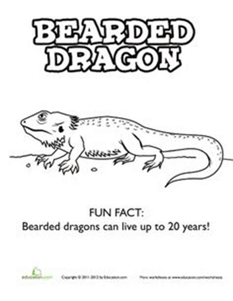 coloring pages of bearded dragons i want a bearded dragon soooo bad on pinterest bearded