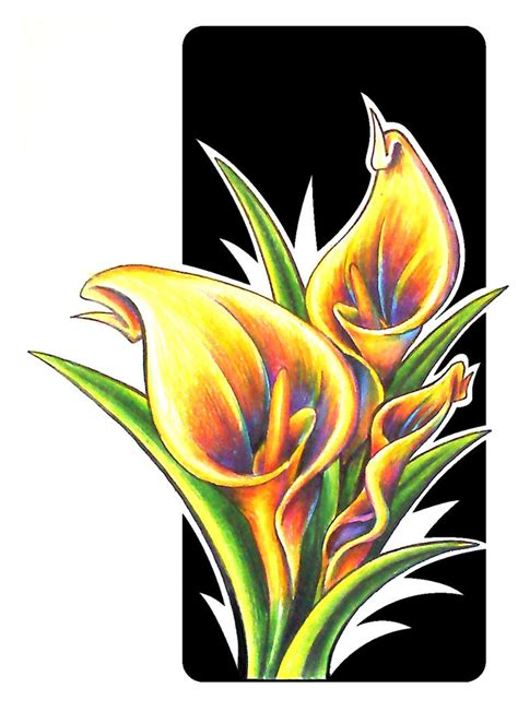 calla lily drawing clipart best