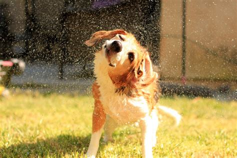 when can i give my puppy a bath 7 myths about baths busted petful