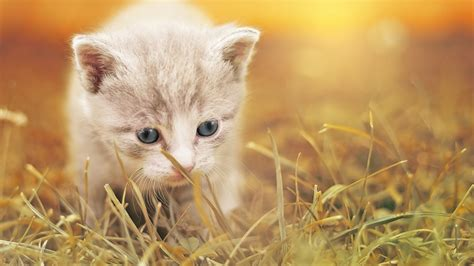 cute kitty hd wallpapers hd wallpapers id