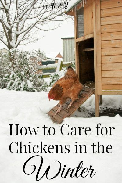 How To Keep Chickens In Your Backyard by The World S Catalog Of Ideas