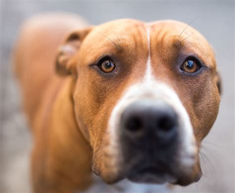how often to let a puppy out at dangerous dogs part 2 myths and misconceptions from both pit bull advocates and