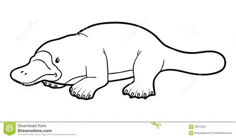 coloring book for children platypus stock vector