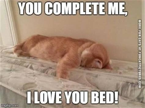bed memes this cat loves his bed fun cat pictures