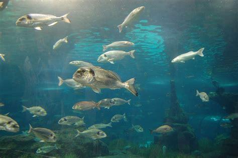 Swimming Fish L saltwater fish bank swimming in the sea alegri free