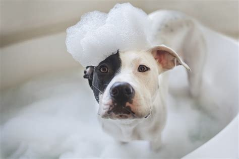 dog in a bathtub 3 tips to cleaning your pup