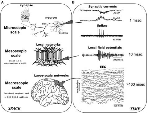 frontiers pathological mobilization and activities frontiers tuning pathological brain oscillations with