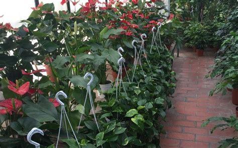 vendita fiori e piante vendita piante e fiori roma vivai aurelia