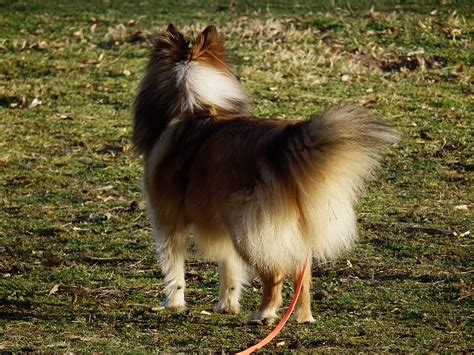 types of sheep dogs types of sheepdogs breeds picture
