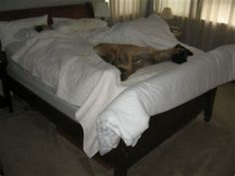 bed for great dane 1000 images about dog beds for great danes on pinterest