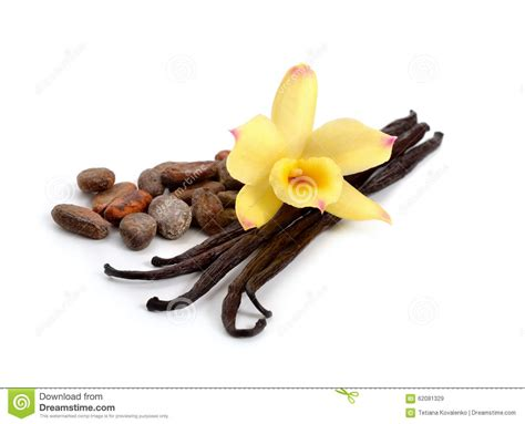 coco vanilla pods of vanilla and cocoa beans with one yellow orchid