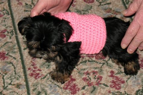 yorkie clothes patterns free free coat patterns to crochet easy crochet patterns