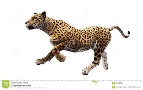 jaguar clipart running jaguar clip 37