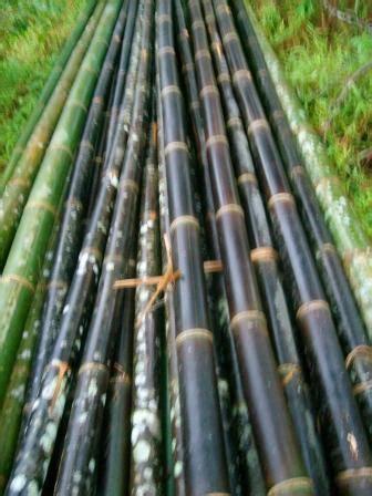 Berapa Kursi Bambu jual bambu dalam partai besar bambu anugrah alam untuk