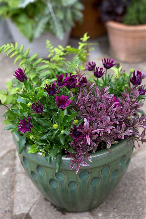 Plant Containers 30 Best Images About Pots For Every Month On