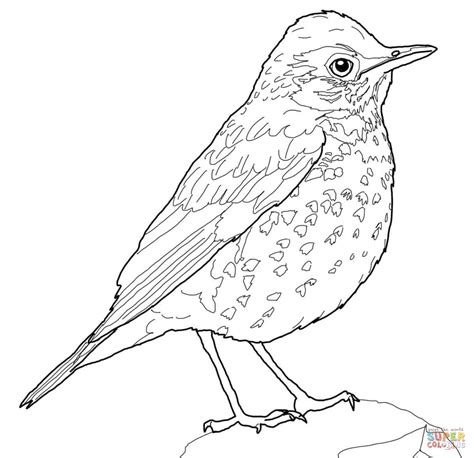 american robin coloring page drawn bird thrush pencil and in color drawn bird thrush