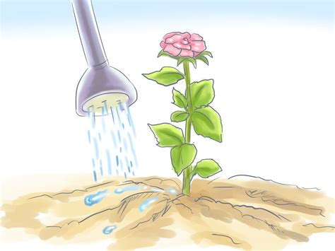 how to grow flowers from seed with pictures wikihow