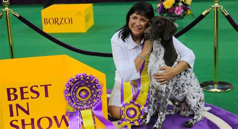 winner westminster show westminster show winner breeds picture