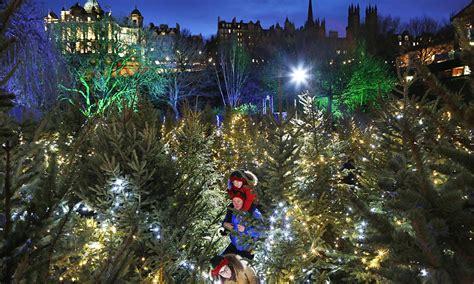 edinburgh christmas tree maze review eyewitness edinburgh world news the guardian