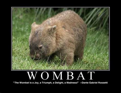 Wombat Memes - wombat meme via v w animals pinterest wombat and meme