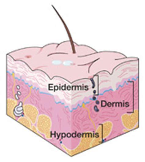 wart cross section discoid lupus erythematosus