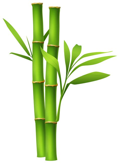 bamboo clip bamboo border free clipart best