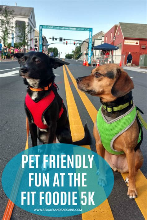 Traveling Fit 5k Plus pet friendly at the fit foodie 5k beagles bargains
