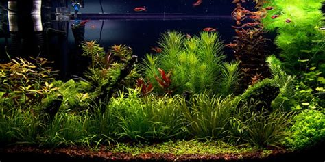 Style Aquascape by Understanding Aquascaping Style The Aquarium Guide