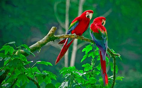 free download images of love birds amazing wallpapers love bird hd wallpapers for pc 11824 amazing wallpaperz