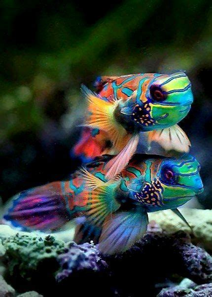 colorful seahorse colorful seahorse photography www pixshark images