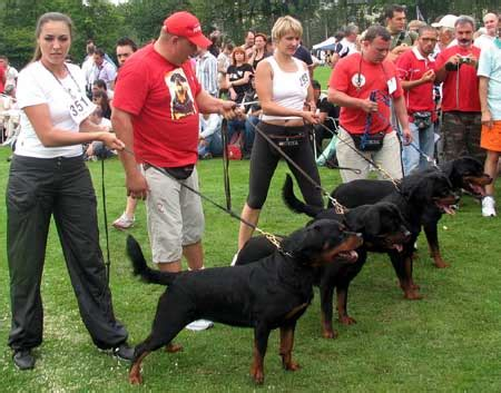 world best rottweiler kennel quot from house rotvis quot rottweiler kennel ukraine