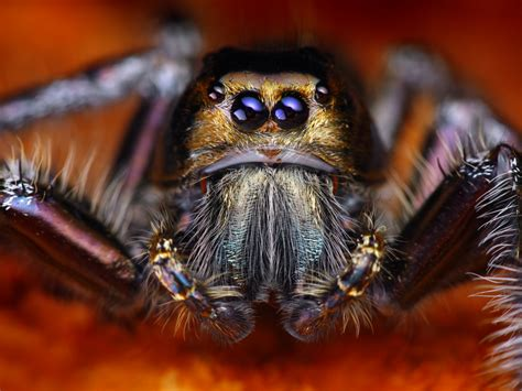 what color is spider blood the saving animal blood worth 60 000 per gallon and