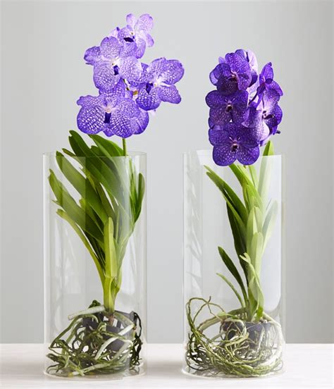 orchid care how to take care of the vanda orchid quotes