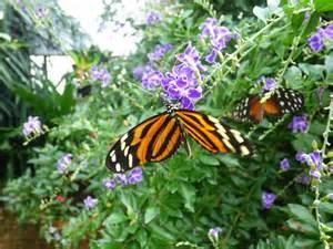 jardins des papillon hunawihr alsace picture