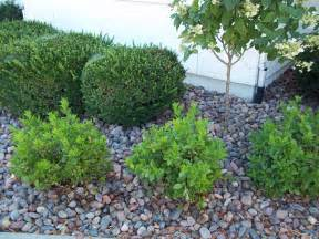 landscaping with river rock lendro plan rock gardens and landscaping
