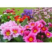 Summer Flowers Nature Garden Colorful A8Vu
