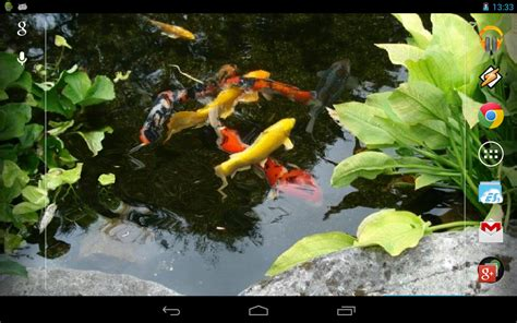koi live wallpaper for windows 7 magic touch realistic koi live wallpaper android apps