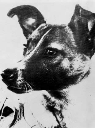 laika the in space i cried as i stroked for the last time it s 60 years since laika became the