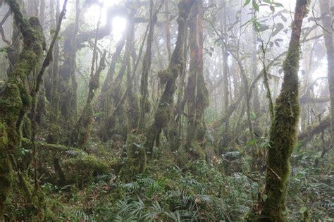 My Trip Pendaki trip pendakian gunung yong belar yang mencabar para pendaki