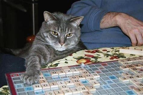 who plays cat cats that play scrabble 10 pics bit rebels